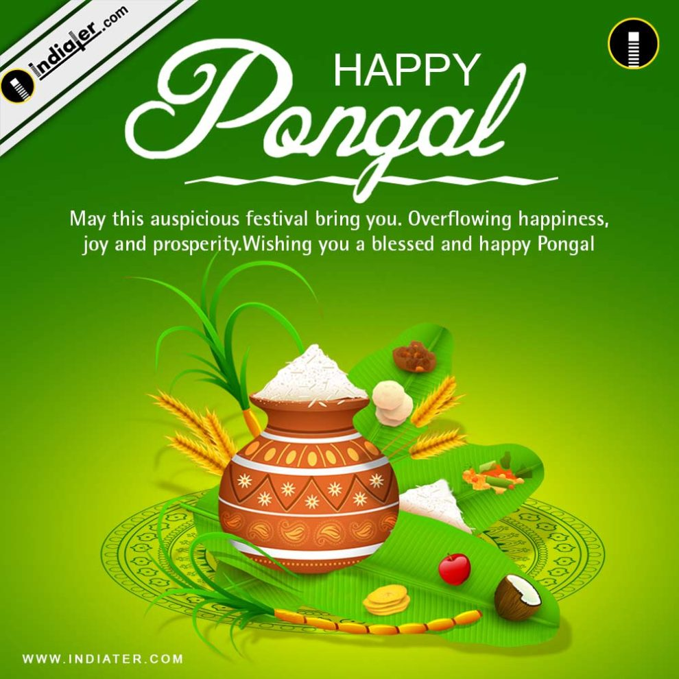 Pongal Festival Greetings Cards And Wishes Psd Template Indiater